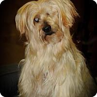 Adopt A Pet :: Mopsy aka SHAGGY - N. Babylon, NY