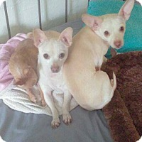 Adopt A Pet :: **Bonded Pair** - Harrisville, RI