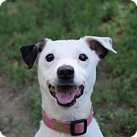 Adopt A Pet :: Spot - Gridley, CA