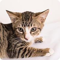 Adopt A Pet :: Poe - Chico, CA