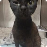 Adopt A Pet :: Sergio (Foster hero needed URI) - Gulfport, MS