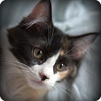Adopt A Pet :: Jerri - Spring Valley, NY
