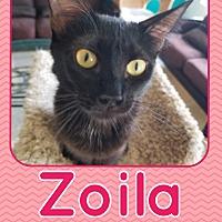 Adopt A Pet :: Zoila - Orange, CA