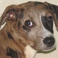 Adopt A Pet :: Autumn - Germantown, MD