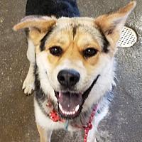 Adopt A Pet :: Bear - Walthill, NE