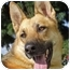 Photo 1 - German Shepherd Dog Dog for adoption in Newport Beach, California - Dolce