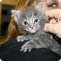 Adopt A Pet :: Whispurr - Washington Terrace, UT