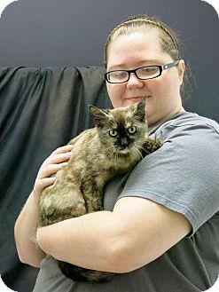 Domestic Shorthair Cat for adoption in Lufkin, Texas - Shy Ann