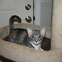Adopt A Pet :: Cookie - Sarasota, FL