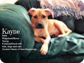 Rhodesian Ridgeback/Boxer Mix Dog for adoption in Marysville, Michigan - Kayne