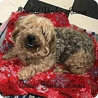 Adopt A Pet :: Holly - Martinsburg, WV
