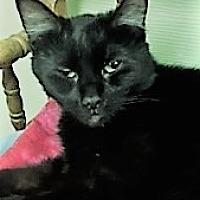 Adopt A Pet :: Sherry - Medina, OH
