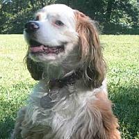 Adopt A Pet :: Betty - Flushing, NY
