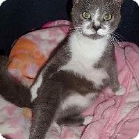 Adopt A Pet :: SAMI - Corona, CA
