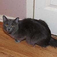 Adopt A Pet :: BONNIE - Cypress, TX