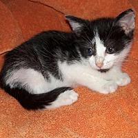 Adopt A Pet :: Joy - Boynton Beach, FL