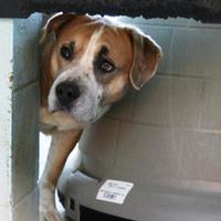 Adopt A Pet :: Sherman - Columbus, NC