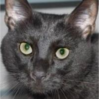 Adopt A Pet :: Sonny /  Tommy - Waupaca, WI