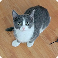 Adopt A Pet :: Harry Pawter - Los Angeles, CA