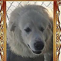 Adopt A Pet :: falker - Midvale, UT