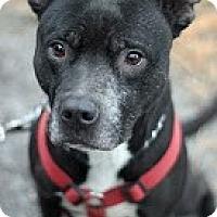 Adopt A Pet :: Pepe - Tinton Falls, NJ