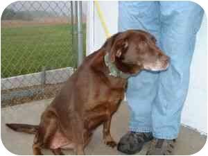 Labrador Retriever Mix Dog for adoption in Aledo, Illinois - Mable