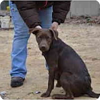 Adopt A Pet :: Carter - New Boston, NH