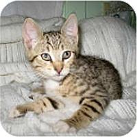 Adopt A Pet :: Nola - Shelton, WA