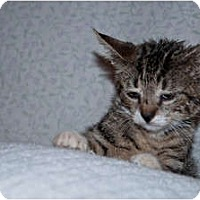 Adopt A Pet :: Paws - New Egypt, NJ