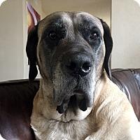 Adopt A Pet :: Bertha - Broomfield, CO