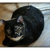 Adopt A Pet :: Twix - london, ON