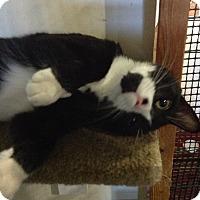 Adopt A Pet :: Jeremiah - Colmar, PA