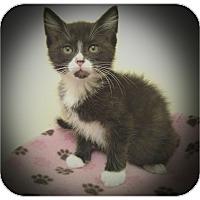 Adopt A Pet :: Mistletoe - Richmond, VA