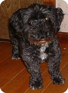 Terrier (Unknown Type, Medium) Mix Dog for adoption in Antioch, California - Dinky