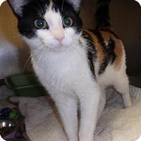 Adopt A Pet :: Tootsie - Keswick, ON