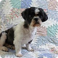 Adopt A Pet :: Maggie - Overland Park, KS