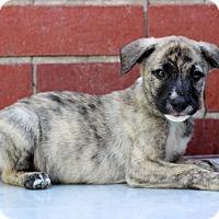 Adopt A Pet :: Einstein - Waldorf, MD