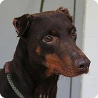 Adopt A Pet :: Lady - Allentown, PA