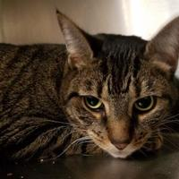 Adopt A Pet :: Noel - Cleveland, OH