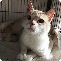 Adopt A Pet :: Hamlet - Wayne, NJ