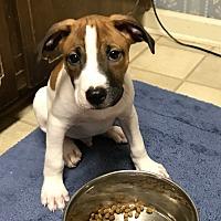 Adopt A Pet :: Spud - Savannah, GA