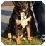 Photo 1 - Greater Swiss Mountain Dog Mix Dog for adoption in Sagaponack, New York - Sadie