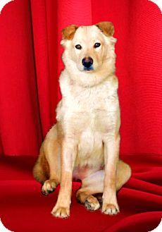 Golden Retriever/Labrador Retriever Mix Dog for adoption in El Cajon, California - HANNAH