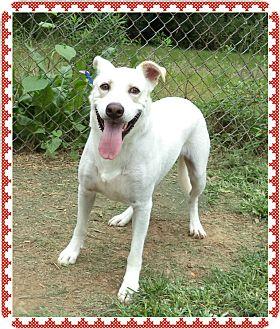 Labrador Retriever Mix Dog for adoption in Marietta, Georgia - CASPAR