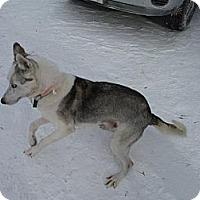 Adopt A Pet :: Shanti - Douglas, ON