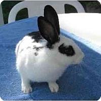 Adopt A Pet :: Nicolette - Santee, CA
