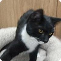 Adopt A Pet :: Button - Anchorage, AK