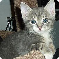 Adopt A Pet :: Adopt cutie-pie Prince James! - Stanford, CA