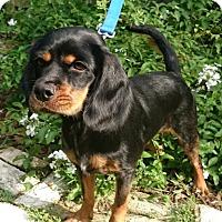 Adopt A Pet :: Marley - Sugarland, TX
