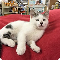 Adopt A Pet :: Otto - Cranford/Rartian, NJ
